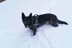 7 Ways to Keep Your K-9 Safe in Harsh Winter Weather