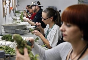 Colorado Prepares for First Legal Pot Industry in U.S.