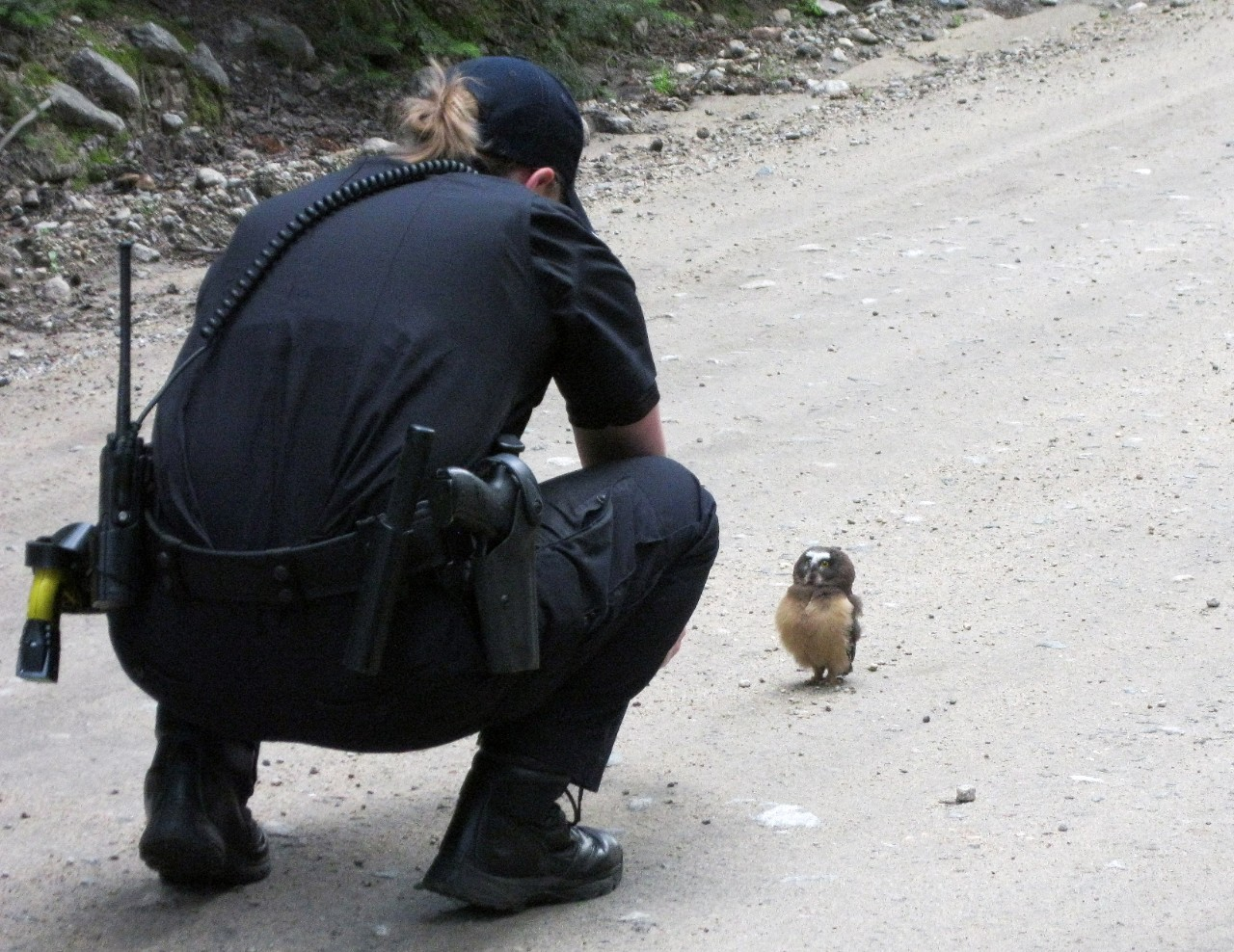Deputy Faces Off with Owl