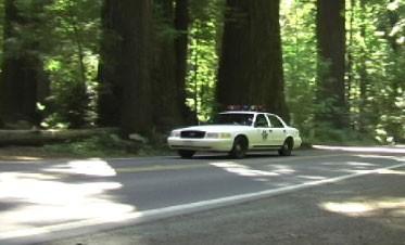 Deputy of the Redwoods