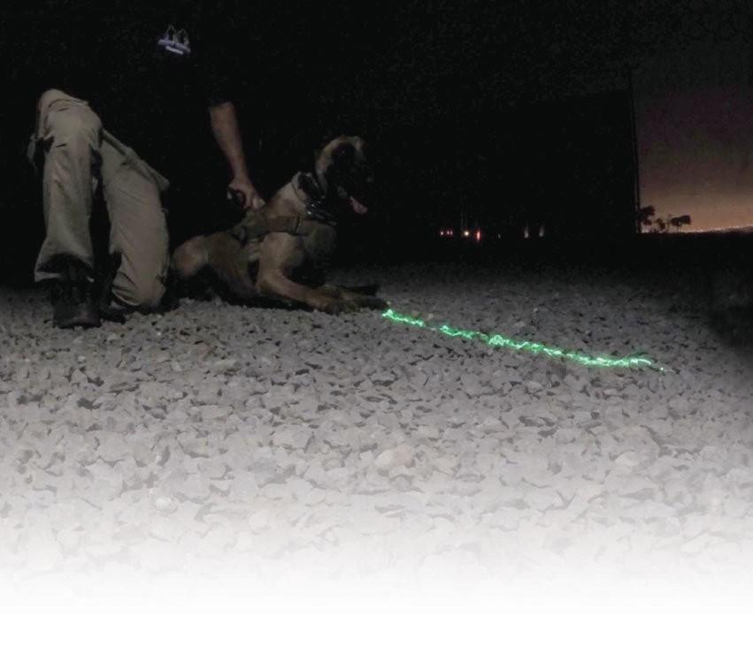 K-9 Laser Training