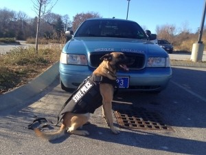 Maine State Police K9s Outfitted with Custom Vests