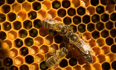 Queen Bee Syndrome Produces Stinging Victimization