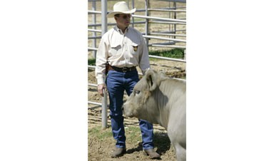 Rustlers keeping special cattle rangers busy