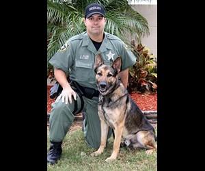 Tampa K-9 Nabs Murder Suspect, Then Retires