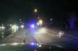 Video: Texas Kangaroo Chase