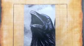 Crow Steals Knife At Crime Scene
