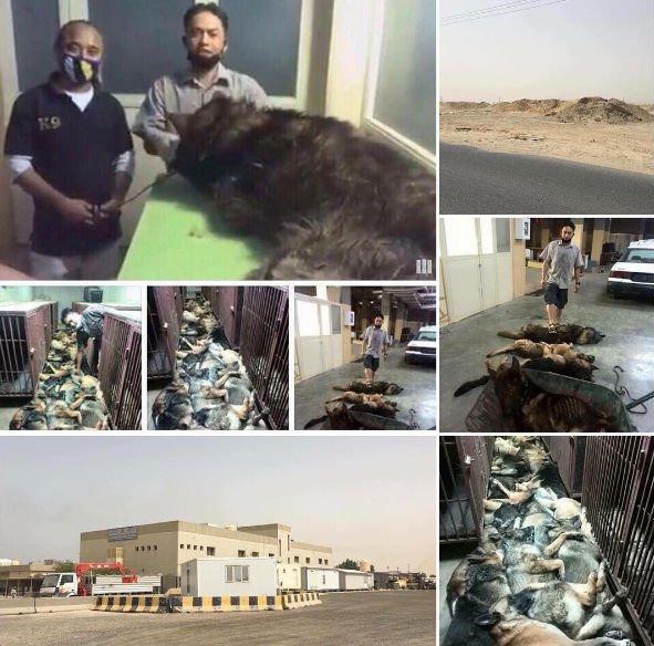 Update To Dozens Of Working Dogs Massacred