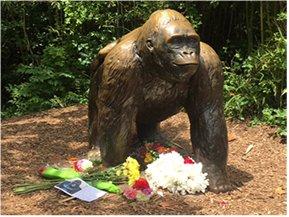 Police Complete Investigation Into Gorilla's Death
