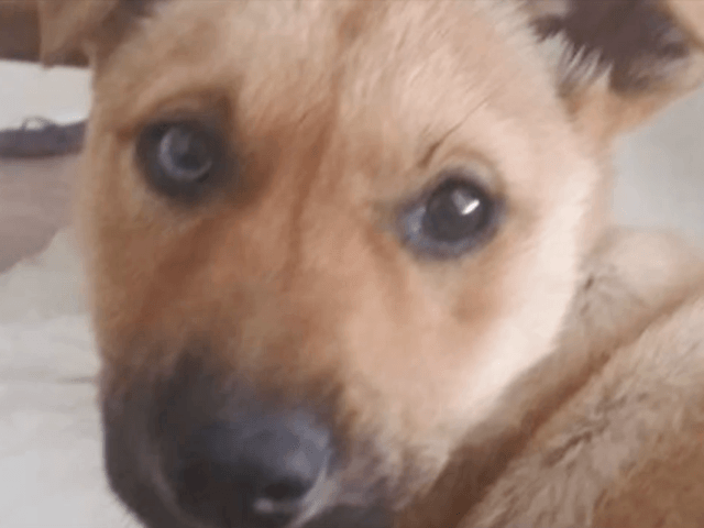 Texas Teens Burn, Mutilate Dog on Social Media