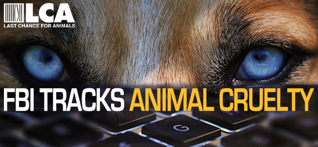 'FBI Tracks Animal Cruelty' Campaign Launched By Non-Profit Group