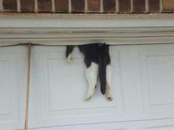 catstuck