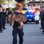 Heartbreaking Photo Shows Agency Saying Goodbye To K9 Officer