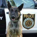 Sacramento K9 Stabbed In Confrontation