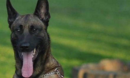 K-9 Officer Dies During Search