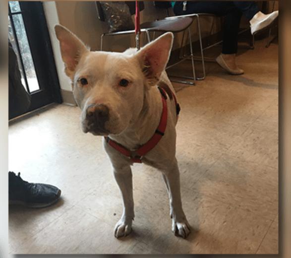 Police Officer Pays Vet Bill For Homeless Man's Dog