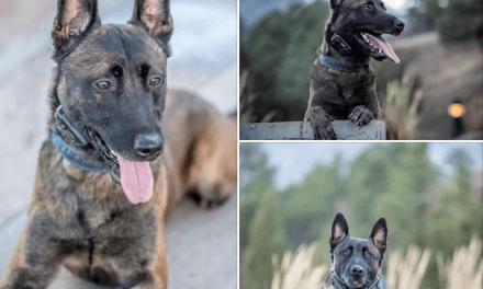 Colorado Springs Mourns The Loss Of K9 Remme