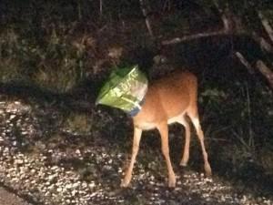 Florida Deputy Gets Deer Out of Bag