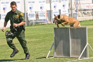 K-9 Summer Safety Tips