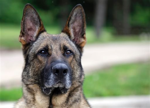 Retired Military Dogs Now Fighting Against Meth