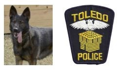 Toledo K9 Killed During Search Image 1
