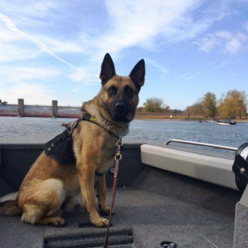 K9 Struck and Killed By Car