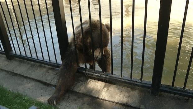 Man Sneaks Into Zoo, Attacked By Bear