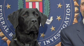 FBI's Newest K-9 Sniffs Out Digital Evidence