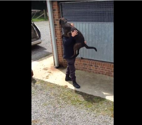 Watch K9 Jump Into Handlers Arms After 2 Weeks Away