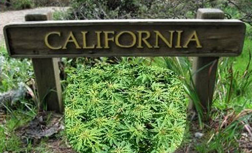 Legalizing Marijuana Will Be On The California Ballot In November