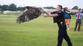 Watch Tulsa Police Rescue And Release Bald Eagle