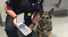 K9 Kina Awarded The Purple Heart