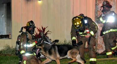4.26.16-Retired-Police-Dog-Leads-Firefighters-to-Toddlers-Trapped-in-Burning-Home3-590×393