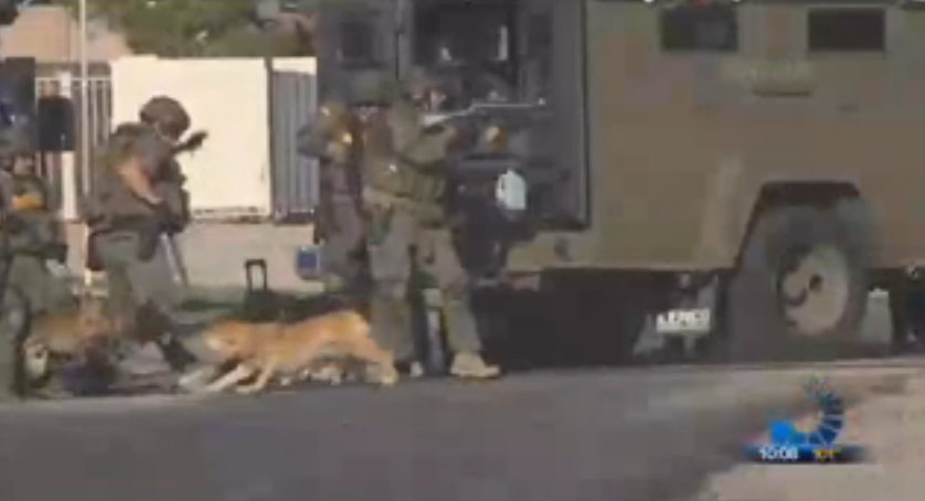 Watch:  Attack On K9 During SWAT Standoff