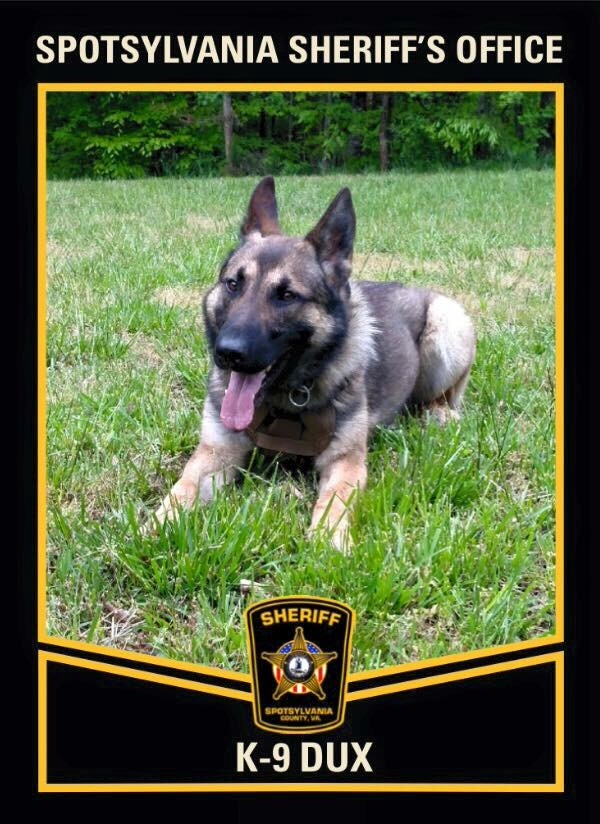 Virginia K9 In Serious Condition After Being Shot