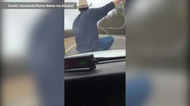 Watch: Man Ropes Calf While Riding On Police Car