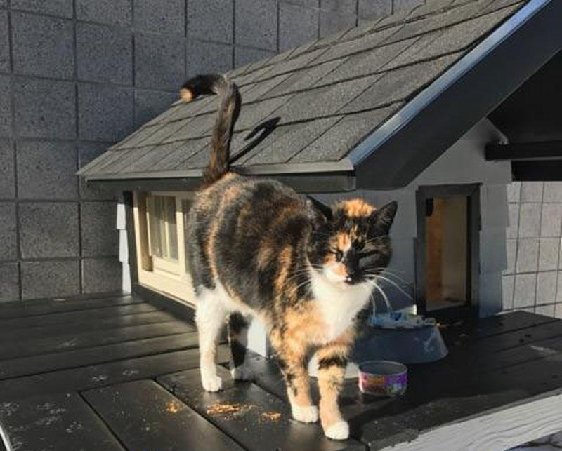 Boston SWAT Team Builds Mini Condo For Mascot 'SWAT Cat'