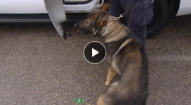 Houston Police K9 Shot By Police Officer