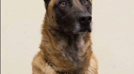 Kansas Police K9 Fatally Shot