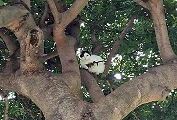 Police Respond To Cat In Tree With Rifle