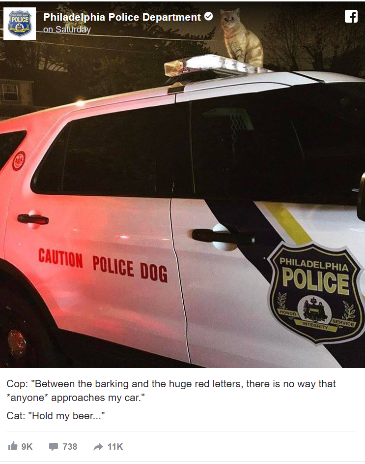 Cat Takes Over Philadelphia K9 Car