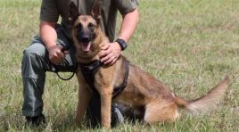 Florida Police K-9 Killed After Mistaken For Coyote