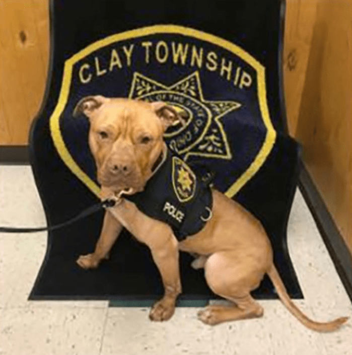 Ohio Agency Saves Dog From Death To Become First Pit-Bull K9