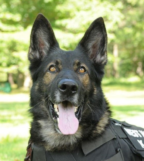 West Hartford Police Mourn The Loss Of K9 Reign