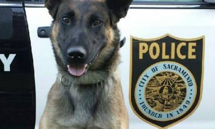 Sacramento K9 Stabbed In Confrontation