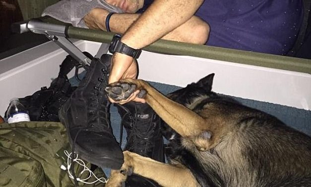 Florida Police Department Shares Heartwarming Photo: '#WeAreInThisTogether':