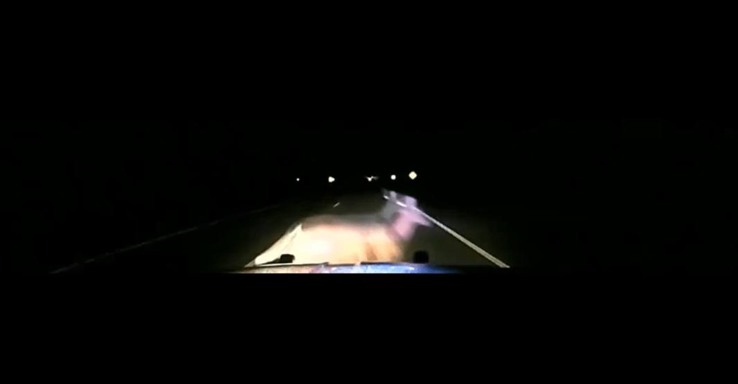 Watch Deputy Strike Deer At 114 MPH