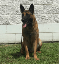 Missing K9 Found Dead Near Home