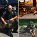 Tewksbury Police K9 Suddenly Dies