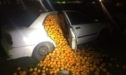 The Great 'Orange' Police Pursuit